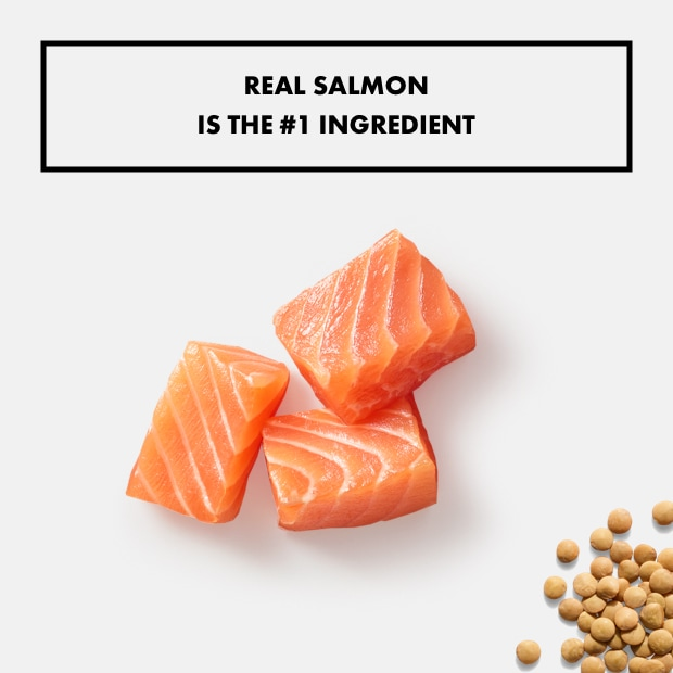 """pieces of salmon and lentils with text that reads """"real salmon is the #1 ingredient"""""""